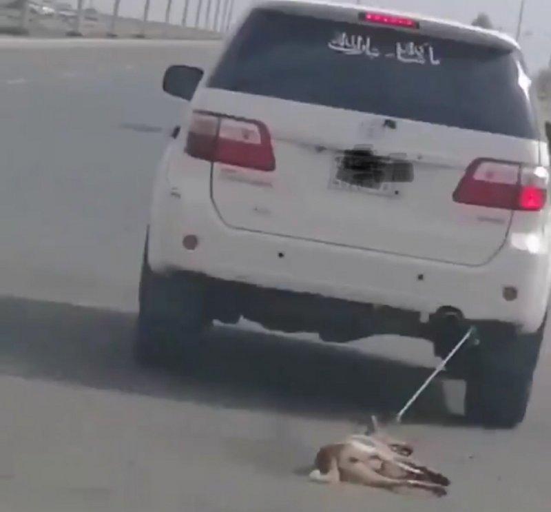 يعذب الكلب بطريقة وحشية