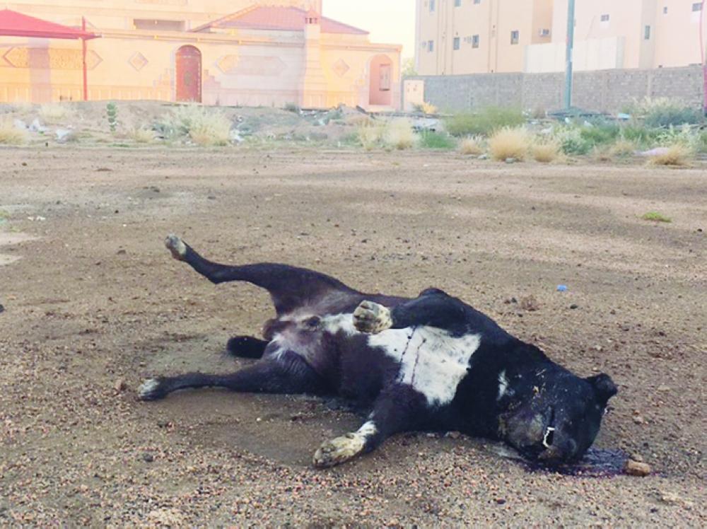 أشخاص صينيون يقتلون كلاباً لبيعها للمطاعم