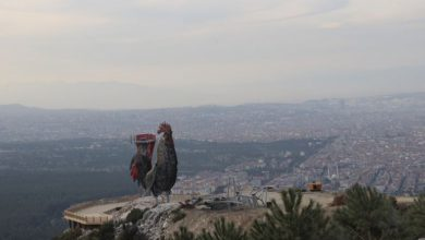Photo of بواسطة ديك.. ولاية تركية تتجهز لدخول موسوعة غينيس