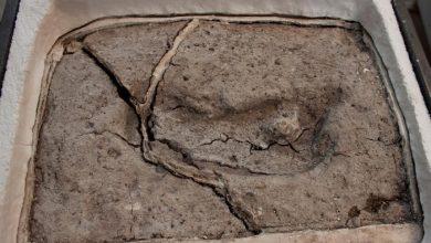 Photo of العثور على أقدم آثار بشرية في الأمريكتين عمرها 15 ألف عام
