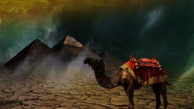 "Photo of حدثت قبل ""الطوفان الأصغر"".. قصّة ""ناقة الله"" التي أتى بها النبي صالح لقومه.. عقـ.ـرها رجلين لقاء الزواج بـ""الصدوف"" و ""الرباب"""
