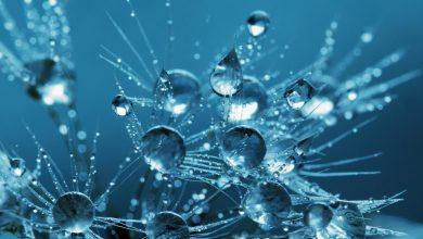Photo of فيروس كورونا : هل شرب الماء بانتظام يقي من الإصابة بالفيروس؟