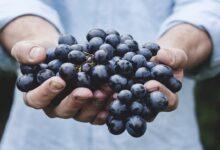 Photo of ثمرة مباركة وله منافع لا تحصى.. إليك فوائد العنب الصحية