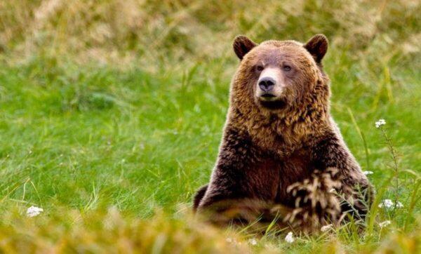 الدببة في تركيا - مواقع التواصل