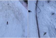 Photo of دب يلاحق متزلجاً وسط الثلوج أعلى جبل في رومانيا (فيديو)