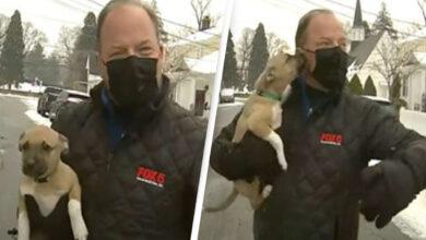 Photo of مواقف طريفة بالجملة مع مراسل تلفزيوني أمريكي وسط الثلوج (فيديو)