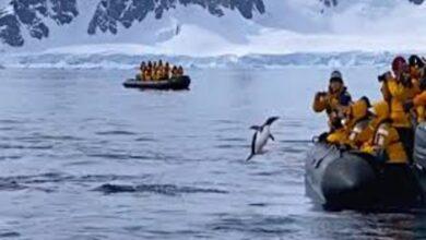 Photo of بطريق يستنجد بالسياح للهروب من حيتان في القطب الجنوبي (فيديو)