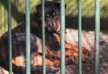 Photo of الصين: حديقة حيوانات تثير الجدل بتقديمها كلباً لديها على أنه ذئب (فيديو)