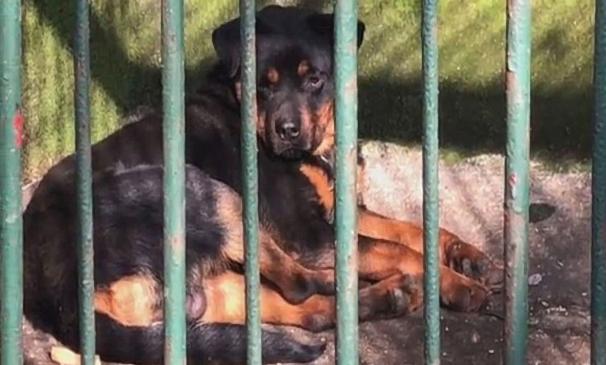الصين: حديقة حيوانات تثير الجدل بتقديمها كلباً لديها على أنها ذئب (فيديو)