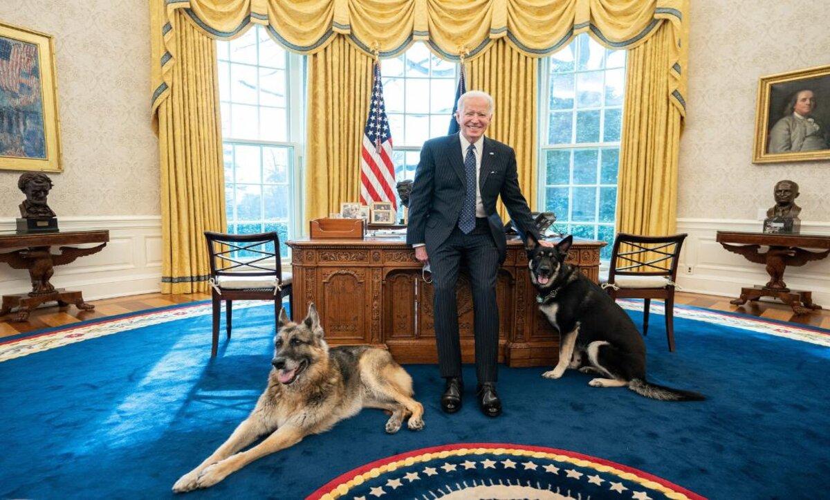 ترحيل كلب بايدن من البيت الأبيض بسبب سلوك غير مناسب