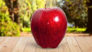 Photo of تفاحة يومياً تغنيك عن الطبيب.. مجلة توثق فوائد أساسية لتناول التفاح بشكل يومي