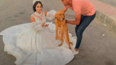 Photo of هبة مبروك.. ناشطة مصرية تثير الجدل بإعلان زواجها من كلب (صور – فيديو)