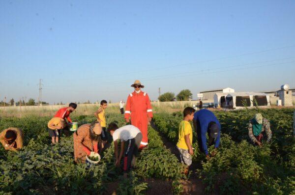 قصة لاجئ سوري تخلى عن 5000 دولار شهرياً وعمل كمزارع في تركيا