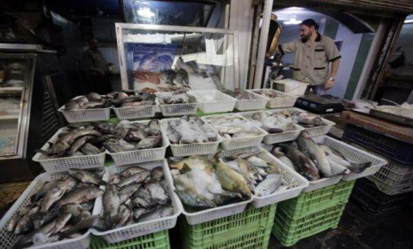 سوريا تسجل انخفاضاً بأسعار السمك ومراقبون يربطون ذلك بالتسرب النفطي