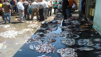 Photo of سوريا تسجل انخفاضاً بأسعار السمك ومراقبون يربطون ذلك بالتسرب النفطي